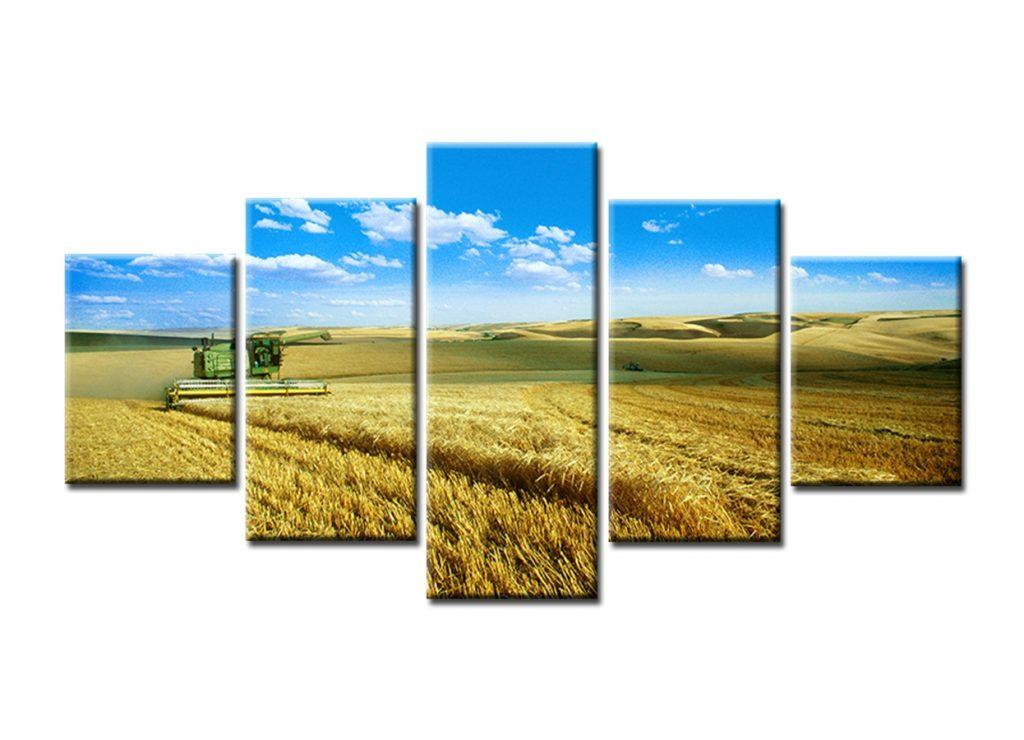 Sustentabilidad y protección al medio ambiente
